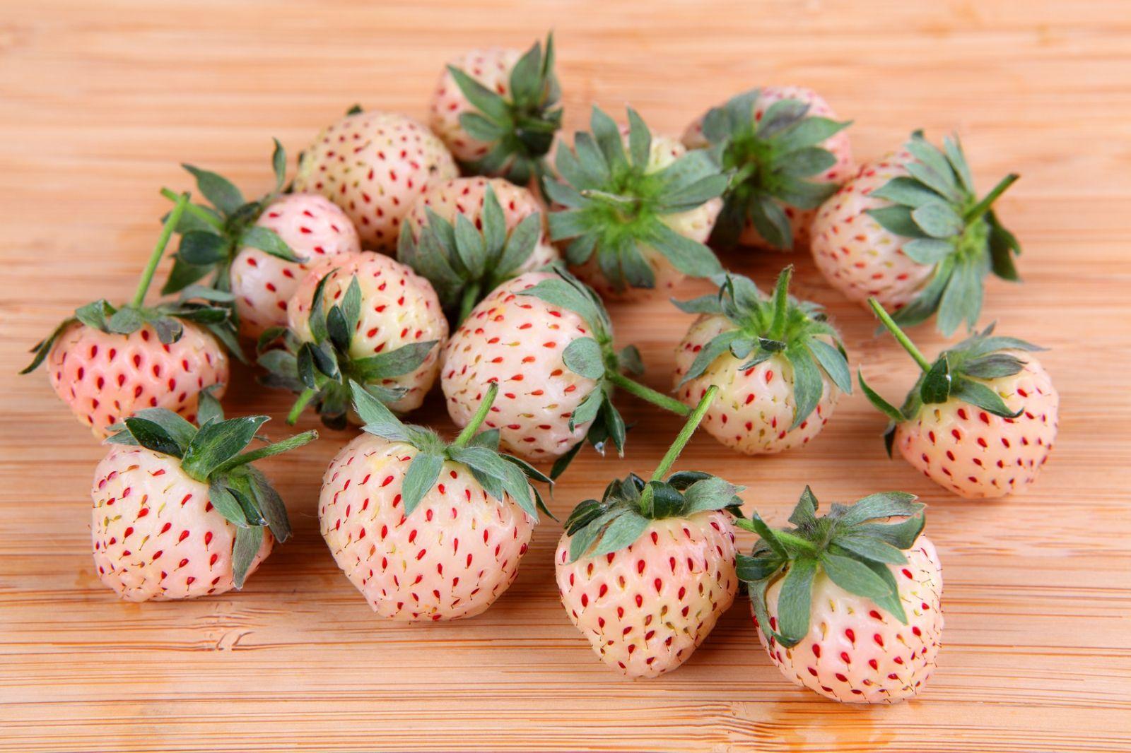 Selection recettes 9 desserts autour de la fraise for Fraisier darselect